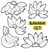 Banana vector set Royalty Free Stock Photos