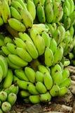 A banana verde Fotografia de Stock