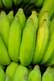 Banana verde Imagem de Stock