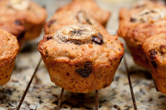Banana, walnut and chocolate chip muffins stock photos