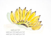 Banana water color painted Royalty Free Stock Photography