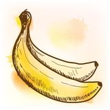 Banana, watercolor painting Stock Image