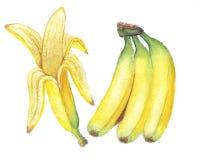 The banana watercolor  painting watercolor  Royalty Free Stock Photos