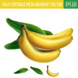 Banana on white background. Vector illustration Royalty Free Stock Images
