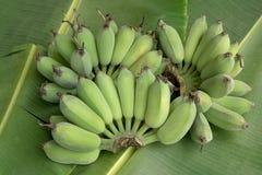 banana zieleni spojrzenie bardzo Obrazy Royalty Free