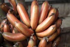 Bananaa rouge Photos libres de droits