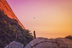 Bananalsleep - Itacoatiara, Niterà ³ i - Brazilië royalty-vrije stock afbeeldingen