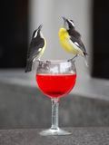 Bananaquit birds on wine glass Stock Photography