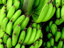Bananas. A big bunch of green bananas for sale on a market in Kenya, Africa Royalty Free Stock Photo
