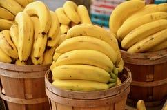 Free Bananas Stock Photos - 123547633
