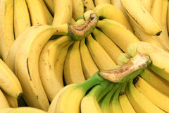 Bananas. The background of yellow bananas Stock Images