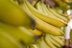 Bananas. For sale at the Sunday market Royalty Free Stock Images