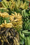 Bananas. Different kind of bananas for sale at market Royalty Free Stock Photos