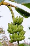 Bananas Fotos de Stock