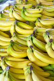 Bananas. Fresh organic healthy yellow bananas Royalty Free Stock Photos