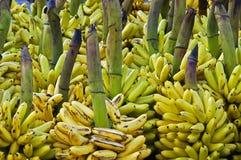 Bananas. Pile of bananas in a market in Ecuador Royalty Free Stock Photography
