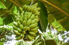 Free Bananas Stock Images - 61285474