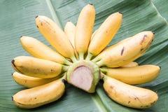 Bananas (Baby Banana). Bunch of mini bananas on green grass background Stock Images