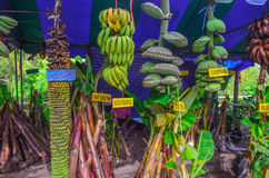 Bananas. Banana varieties in stores species Stock Photography