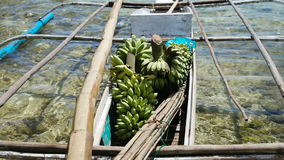 Bananas in the boat. Boat transporting bananas.fruits in the boat ,floating market.Bananas in the national Philippine boat.Asian market stock video