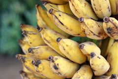 bananas branch ripe Royalty Free Stock Images