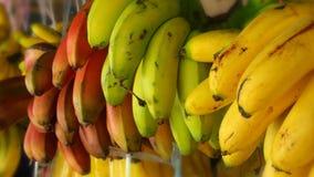 Bananas brilhantes Imagem de Stock