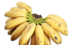 Bananas called Lady fingger on white. Bunch of local bananas called ladies fingger on isolated background Royalty Free Stock Photos