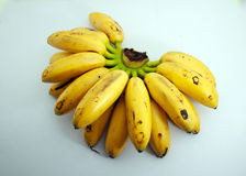 Bananas called Lady fingger on white. Bunch of local bananas called ladies fingger on isolated background Stock Image