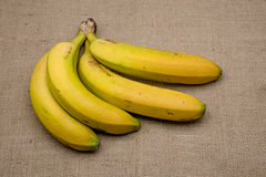 Bananas from the Canary Islands on rustic background.  Stock Photography