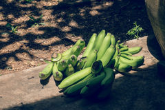 Bananas. Are cut from the tree stock photography