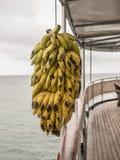 Bananas de suspensão imagens de stock royalty free
