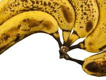 Bananas em uma fileira Fotografia de Stock Royalty Free