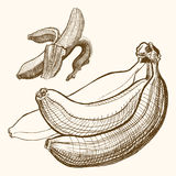 Bananas engraving drawing. Fruit and food themes. Bananas engrawing drawing. Fruit and food themes Royalty Free Illustration