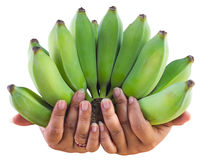 Bananas with fat fingers. Royalty Free Stock Photography