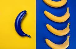 Bananas frescas e azul amarelos maduros uma isolados no azul e no amarelo Imagem de Stock