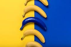 Bananas frescas e azul amarelos maduros uma isolados no azul e no amarelo Imagem de Stock Royalty Free