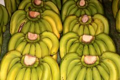 Bananas frescas na exposição Fotos de Stock Royalty Free
