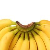 Bananas Royalty Free Stock Images