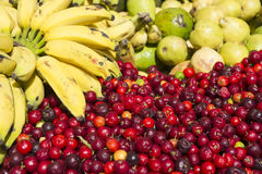 Bananas and Fresh Ripe Red Acerola Cherry Fruit. Colorful fruit harvest of bananas, limes, and bright red acerola cherries at Brazilian tropical fruit farmers Stock Image