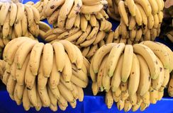 Bananas Fruit big harvest Stock Images