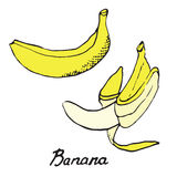 Bananas. Hand drawn doodle, sketch in pop art style, vector, Bananas Royalty Free Stock Images