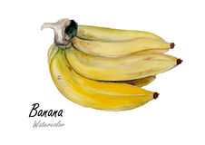 Bananas Hand drawn watercolor painting on white background Stock Photos