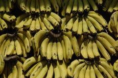 Bananas I. Bunches of Bananas stock photography