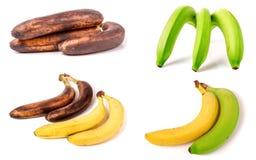 Bananas imaturas, maduras e passados no fundo branco Grupo ou coleção Fotografia de Stock Royalty Free