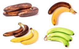 Bananas imaturas, maduras e passados no fundo branco Grupo ou coleção Fotos de Stock Royalty Free