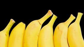 Bananas isoladas em um fundo preto Imagem de Stock