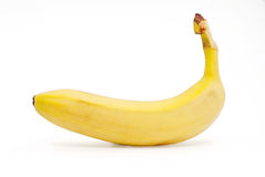 Bananas isolated on the white background. 。 Royalty Free Stock Photos