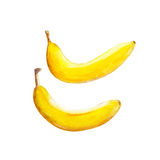The bananas isolated on white background, watercolor illustration fruit set. In hand drawn style Vector Illustration