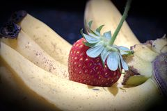 Bananas and a juicy strawberry, freshly picked. From the garden, grown in Jamaica stock images