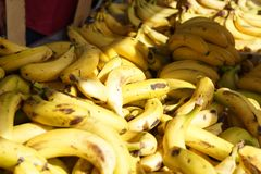 Bananas lie on the counter at the fruit market in Spain Royalty Free Stock Photo